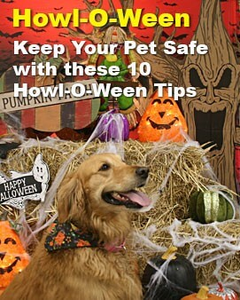 Howl-O-Ween Safety Tips
